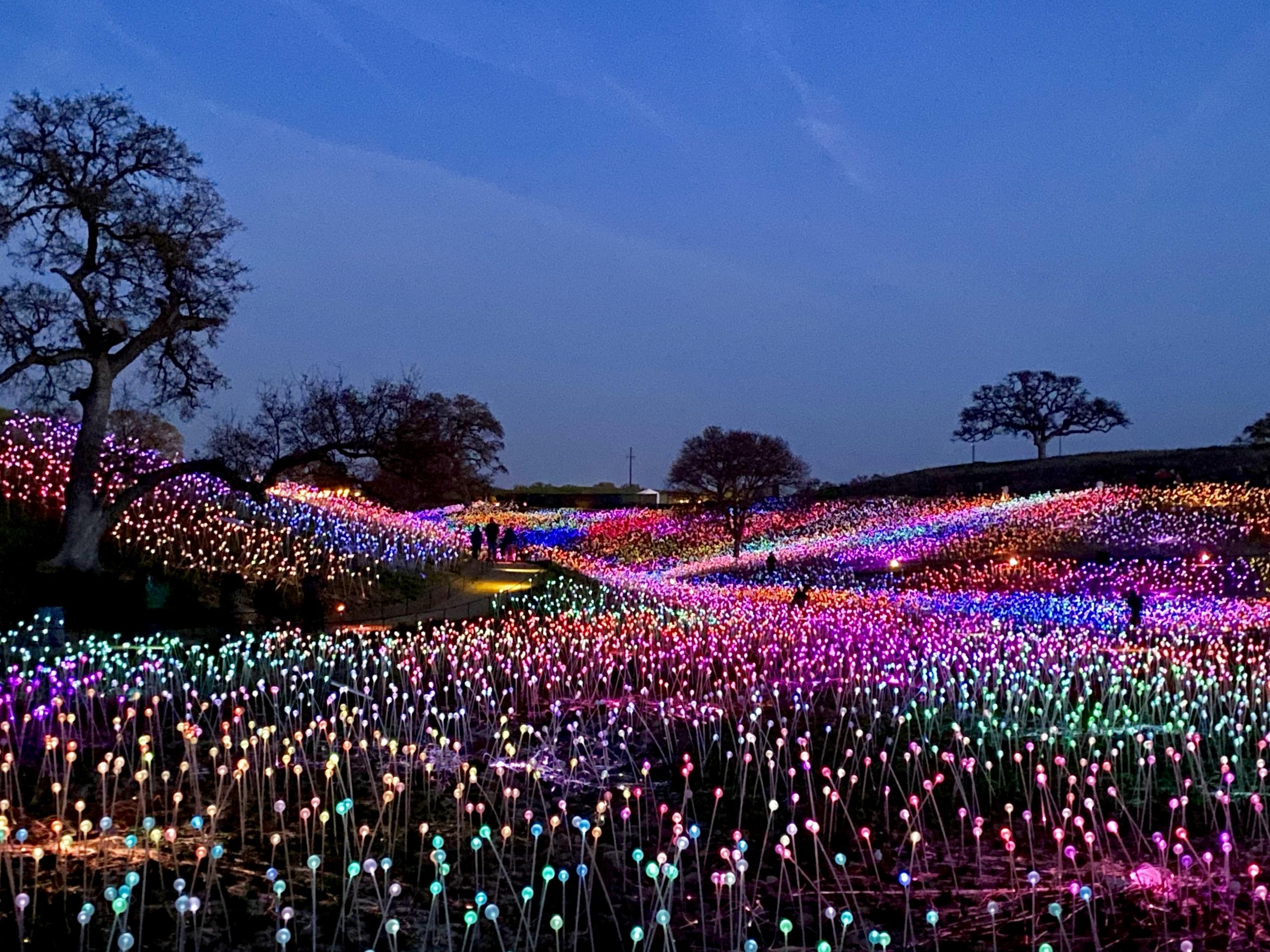 bruce munro Field of Light