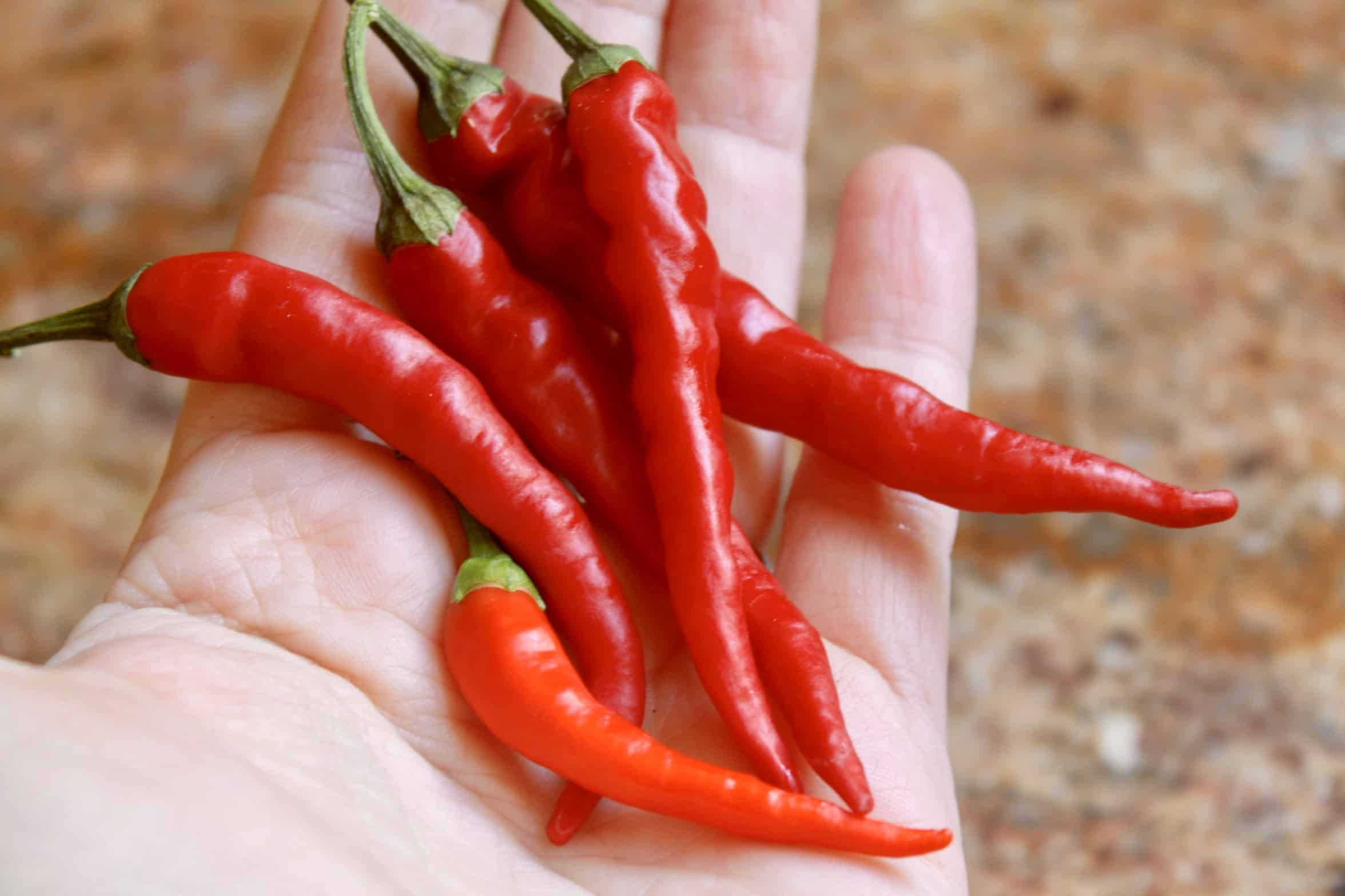 cayenne peppers on a hand