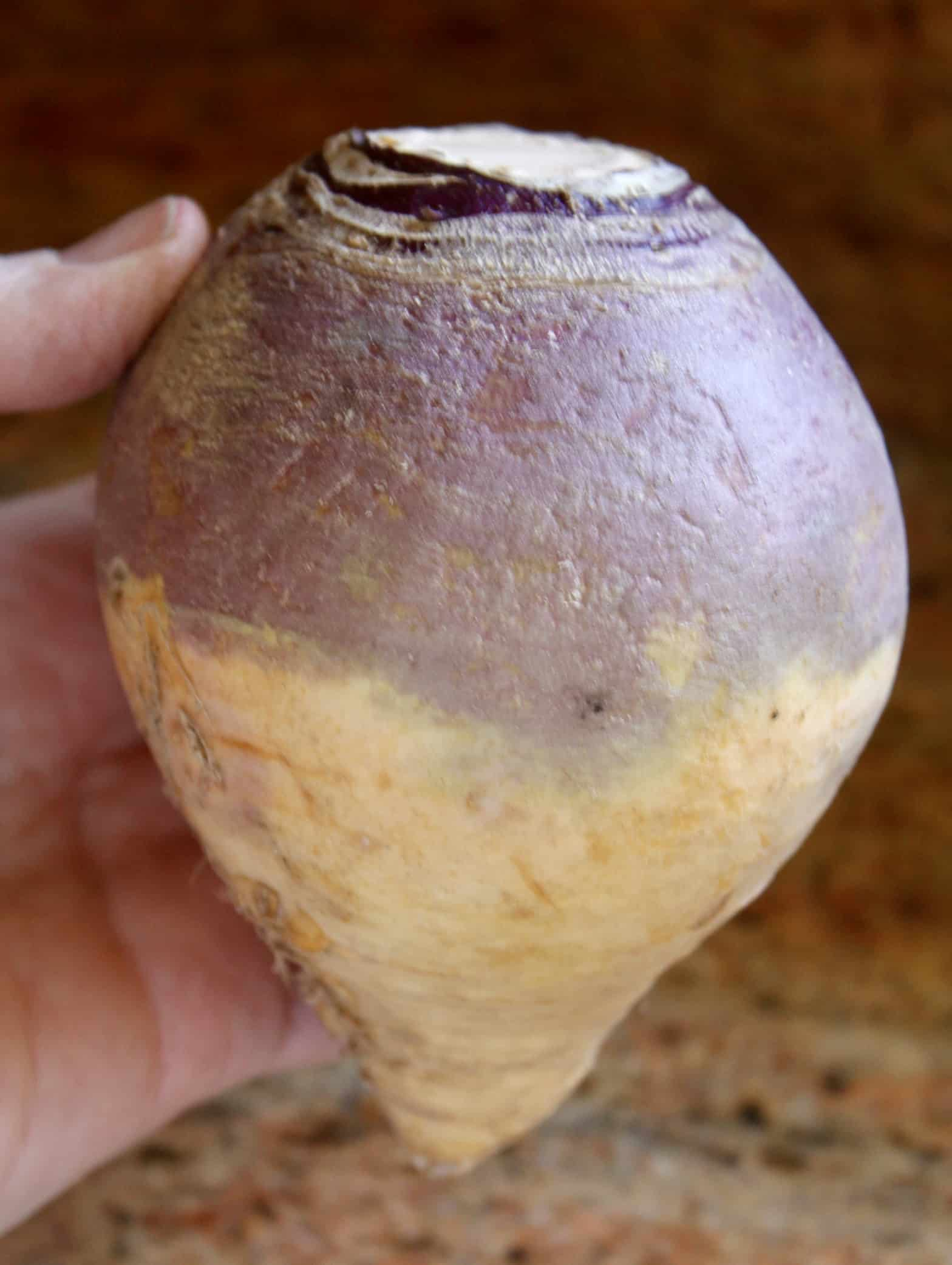 a typical rutabaga/swede