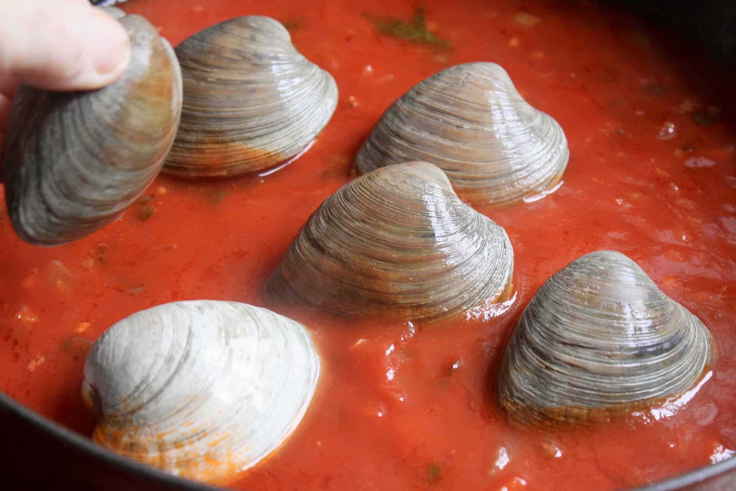 adding clams to cioppino